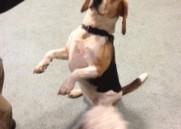 Bonnie dancing